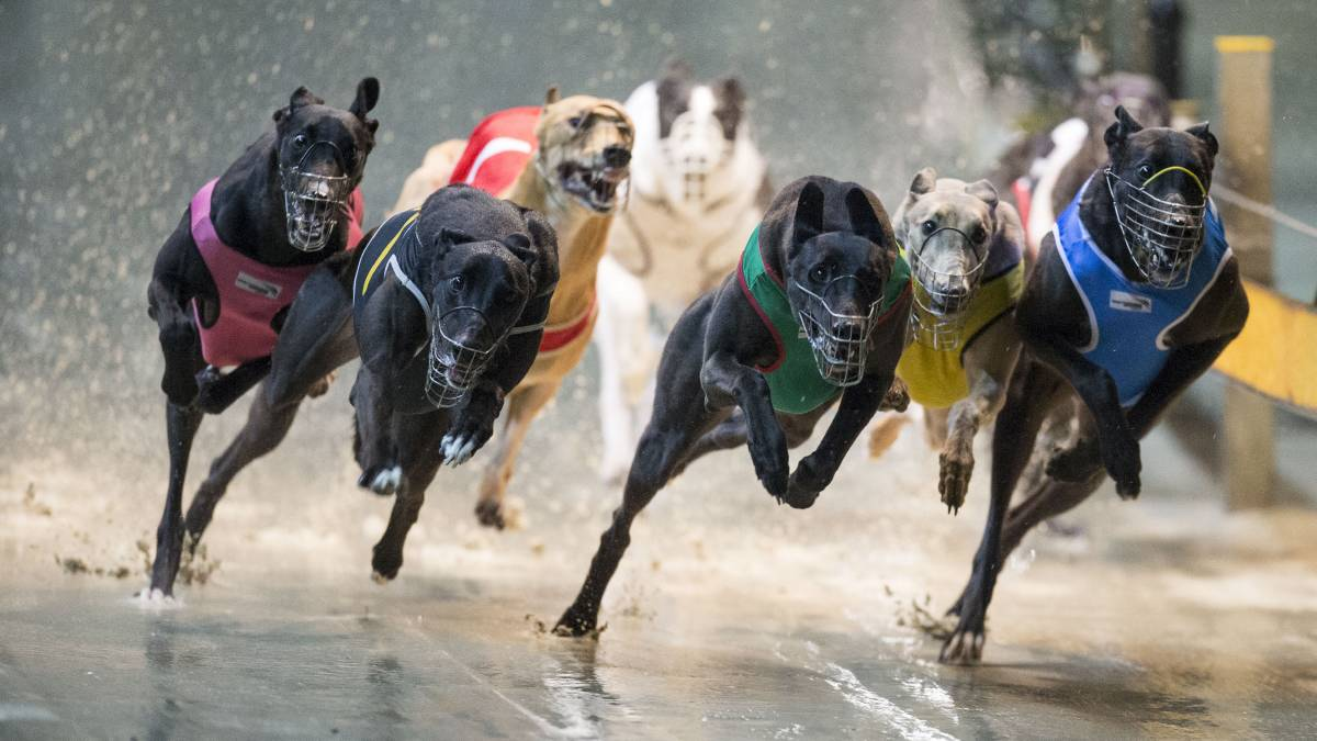 Greyhound Racing Countries